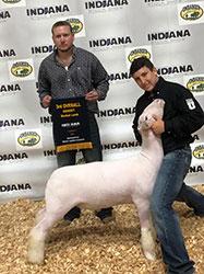 Plank Sheep Company | Champions
